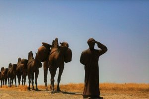 Learn About the Silk Road and Ancient Trade